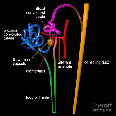 Digital Art - Nephron Black With White Labels by Russell Kightley