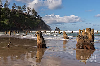 Photograph - Neskowin Ghost Forest by Tim Moore