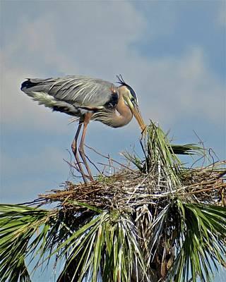 Photograph - Nest Building by Carol Bradley