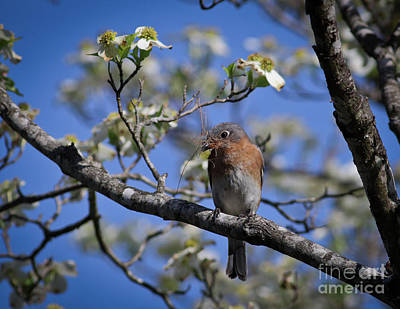 Art Print featuring the photograph Nest Building by Douglas Stucky