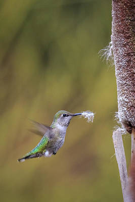 Photograph - Nest Building by Windy Corduroy