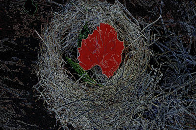 Photograph -  Nest In Time by Lesa Fine