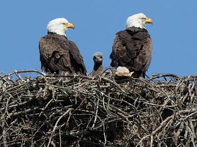 Photograph - Nest Trio by Art Cole