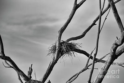 Photograph - Nested by Douglas Barnard