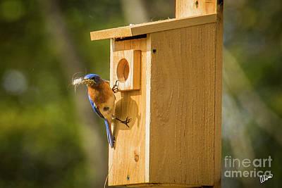 Photograph - Nesting  by Alana Ranney