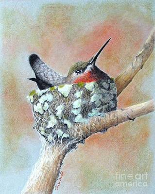 Hummingbird Drawing - Nesting Anna by Phyllis Howard