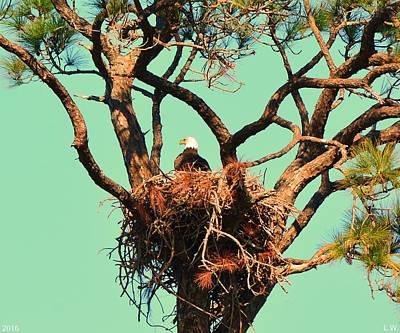 Photograph - Nesting Bald Eagle by Lisa Wooten