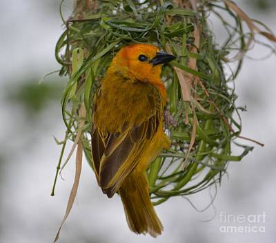 Photograph - Nesting Bird by Janice Spivey
