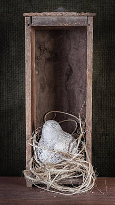 Wood Box Photograph - Nesting Bird Still Life by Tom Mc Nemar