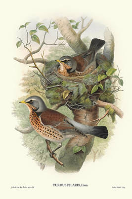 Digital Art - Nesting Birds by Gary Grayson