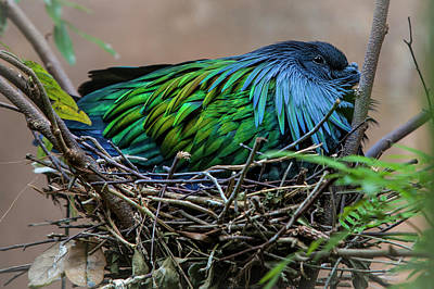 Photograph - Nesting by Charles Warren
