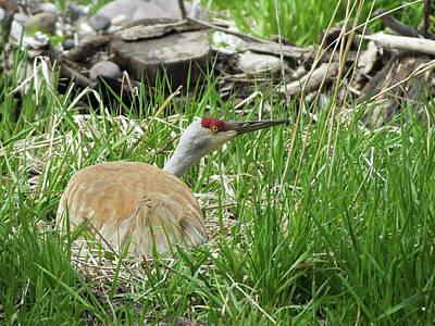 Gallatin River Photograph - Nesting Crane by Scott Feddes