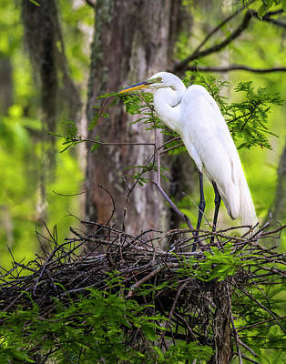 Photograph - Nesting Egret by Andy Crawford