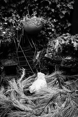Photograph - Nesting by Glenn DiPaola