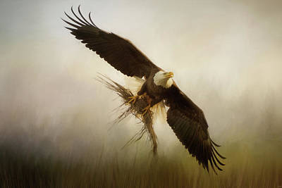 Photograph - Nesting Harvest Bald Eagle Art by Jai Johnson