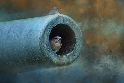 Nesting In Cannon 61 Art Print