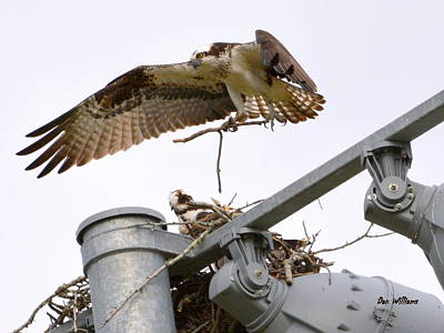 Photograph - Nesting In The Lights by Dan Williams