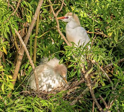 Photograph - Nesting by Jane Luxton