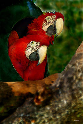 Photograph - Nesting Red Macaws by Bibi Rojas