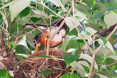 Photograph - Nesting Robin by Lisa Wooten
