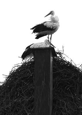 Photograph - Nesting Storks by Matt MacMillan