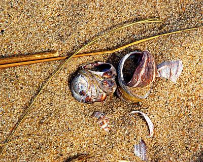 Photograph - Nestled In The Sand by Lynda Lehmann