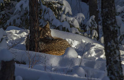 Photograph - Nestled In The Snow by Jeff Shumaker