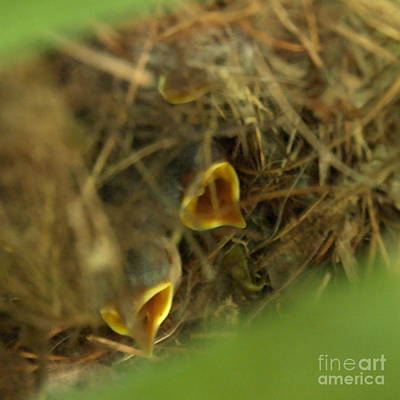 Photograph - Nestlings by Kathi Shotwell