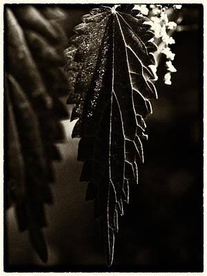Winter Animals - Nettle Leaf in Black by Mark Egerton
