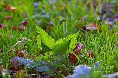 Grow Digital Art - Nettle Lies In Grass With Backlit By Sunlight by Lucie Rejmanova