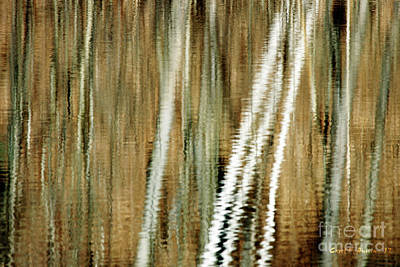 Photograph - Neutral Reflections by Carol F Austin