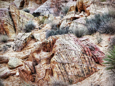 Photograph - Nevada - Mojave Desert - Line Art by Leslie Montgomery