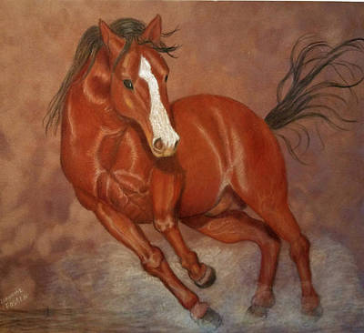Drawing - Nevada Mustang by Lorraine Foster