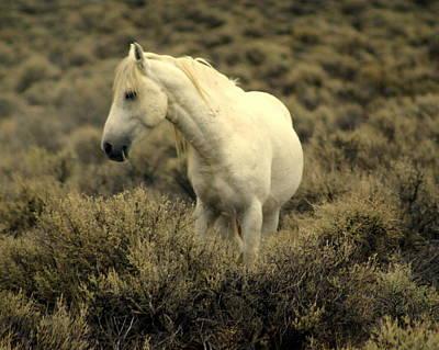 Nevada Wild Horses 4 Art Print by Marty Koch