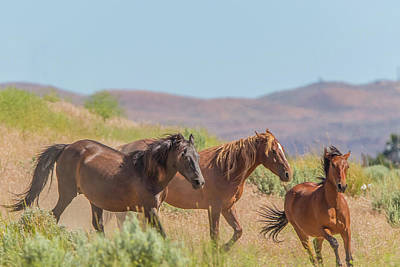 Photograph - Nevada Wild Horses  by Marc Crumpler