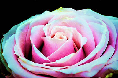 Wall Art - Photograph - Never A Rose Without A Prick by Jessica Manelis