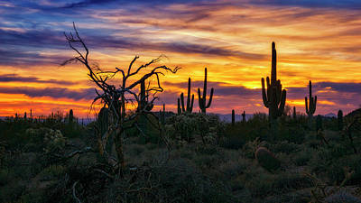 Photograph - Never Ending Beauty Of The Desert  by Saija Lehtonen