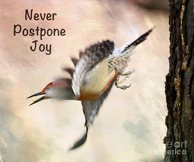 Photograph - Never Postpone Joy by Kerri Farley
