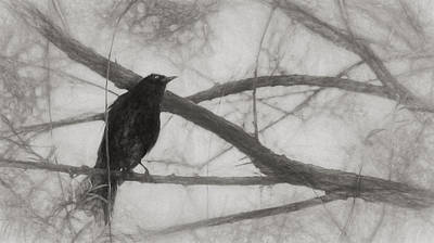 Digital Art - Nevermore by Melinda Wolverson