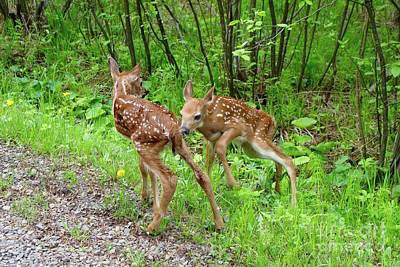 Photograph - New Babies  by Sandra Updyke