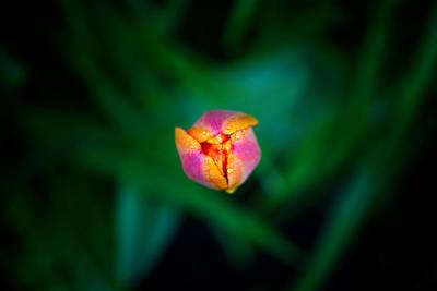 Photograph - New Beginning by Eliaichi Kimaro