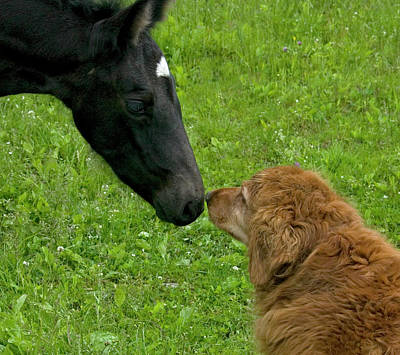 New Born Touching Noses Art Print