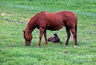 Photograph - New Colt by Robert Bales