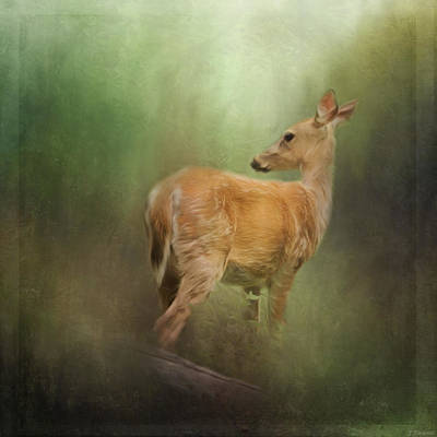 Whitetail Fawn Painting - New Day Dawning - Wildlife Art by Jordan Blackstone