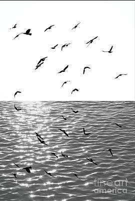 Photograph - New Destination by Marcia Lee Jones
