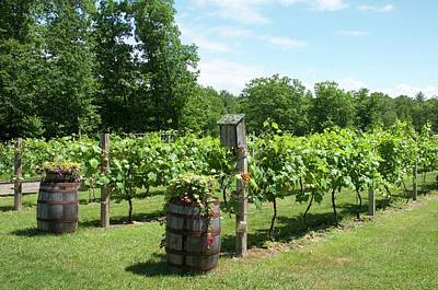 Photograph - New England Vineyard by Caroline Stella