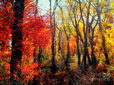 New England Colors Of Autumn Print by Rick Maxwell