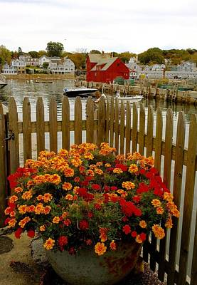 Photograph - New England Delight by My Lens and Eye - Judy Mullan -
