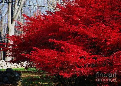 New England Fall Shots Photograph - New England Glory by Poet's Eye