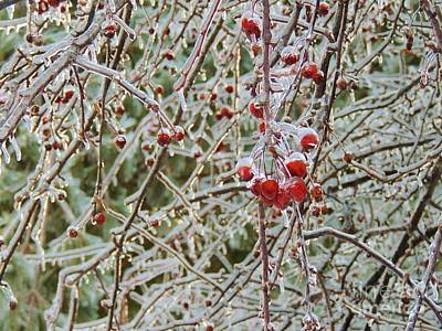 Photograph - New England Ice Storm by Lisa Gilliam